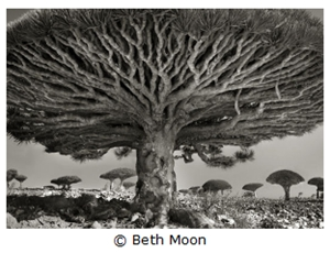 Learn more about Juror Beth Moon!