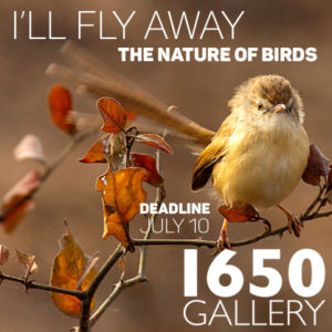 Learn more about the I'll Fly Away exhibit from the 1650 Gallery!