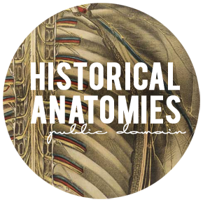 Download FREE public domain HISTORICAL anatomies from the National Library of Medicine & National Institute of Health!