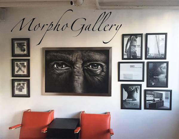Learn more from the Morpho Gallery!